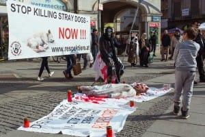 10_Aktivismus_gegen_Straßenhunde