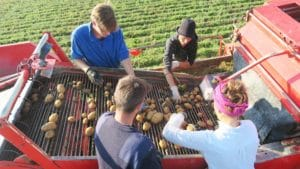 Kartoffelkombinat acTVism Munich