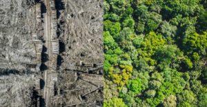 Die Zerstörung der Natur stoppen | Die Stopp-Ökozid-Kampagne